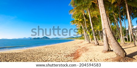 A beautiful tropical beach with palm trees at sunrise in northern tropical Australia - stock photo