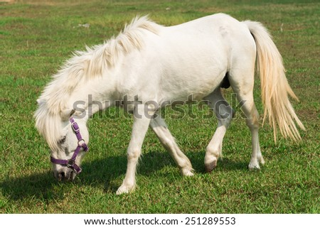 A beautiful white horse feeding in a green pasture. - stock photo