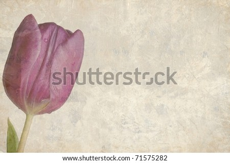 A Beautifully Textured Card with a Single Purple Tulip with Room for Text - stock photo