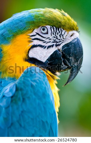 A beautifuly coloured Macaw parrot - stock photo