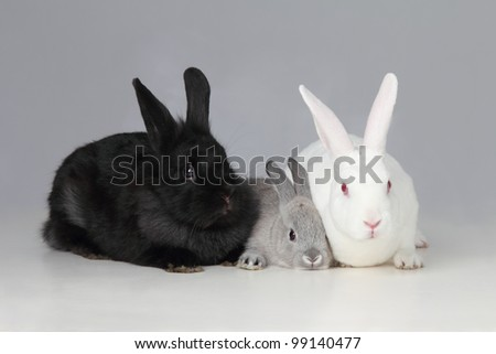 A biracial bunny rabbit is loved by his parents - stock photo