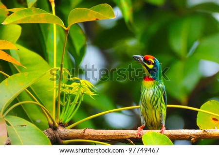 A Bird - stock photo