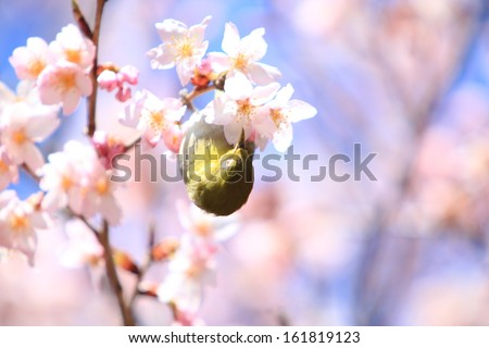 A bird hanging upside-down from a cherry tree. - stock photo