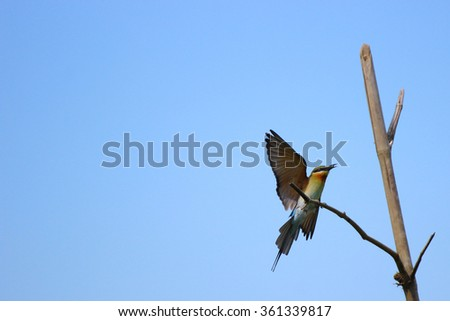 a bird landing sitting on a branch twig chip tree with blue sky - stock photo