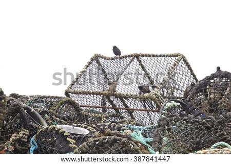 A bird sitting on fishing or sea food nets. - stock photo
