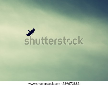 A bird spreading its wings and fly to heaven sky. retro filtered image  - stock photo