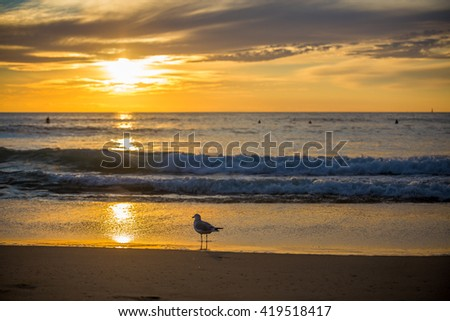 A bird watches a beautiful sunset over the ocean with surfers in the background. - stock photo