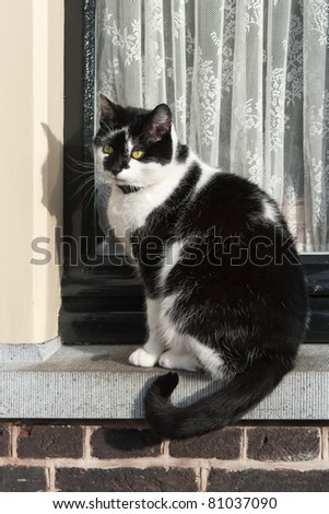A black and white cat is sitting in front of a window waiting to get inside - stock photo