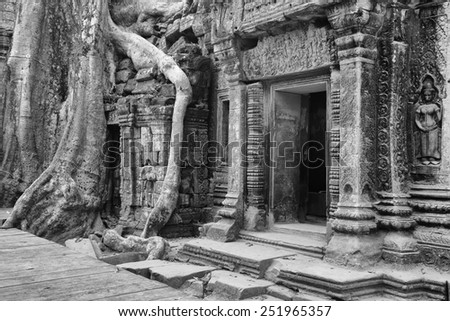 a black and white image of ancient Kmher ruins slowly being taken over by the Cambodian rainforest - stock photo