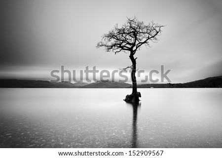 A black and white shot of a lone tree partially submerged in the waters of Loch Lomond, Scotland - stock photo