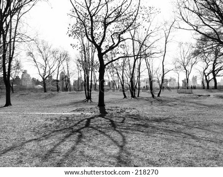 A black and white tree with shadow in Central Park, New York City. - stock photo
