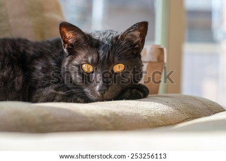 A black cat rests on a chair in the afternoon sun - stock photo