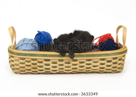 A black kitten that just opened its eyes sits in a basket - stock photo