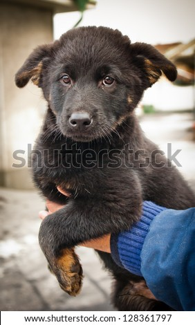A black puppy - stock photo