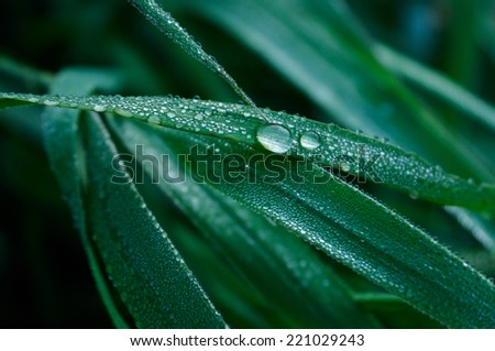 A Blade of Grass and Water Droplets closeup - stock photo