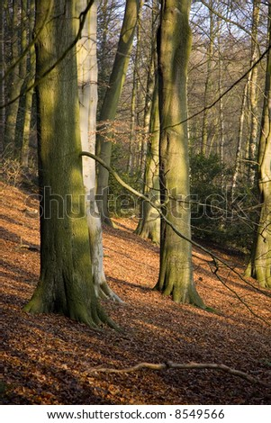 A blanket of fallen leaves on a woodland floor. Autumn is here - stock photo