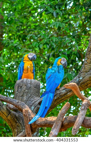 A blue and yellow parrots - stock photo