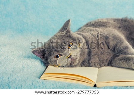 A blue british cat is wearing glasses lying and sleeping on the book - stock photo