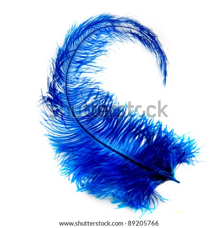 a blue feather - stock photo