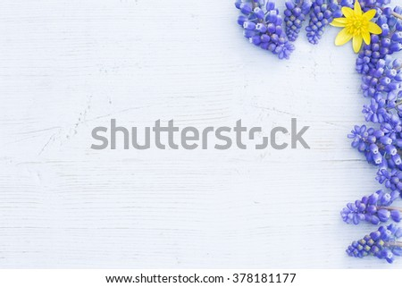 a blue pastel wooden board framed with hyacinths and a  yellow spring flower - stock photo