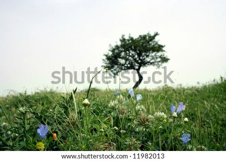 A blur tree on grass - stock photo