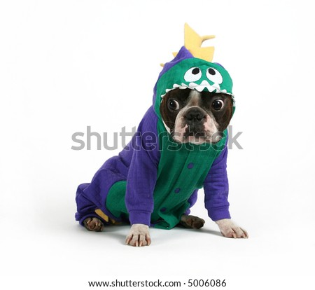 a boston terrier in a dinosaur costume - stock photo