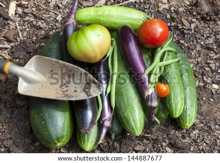 A bounty of freshly picked homegrown garden vegetables - stock photo