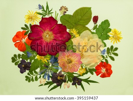 A bouquet of flowers on a light background. Pressed, dried rosehip flowers, gladiolus, geranium, violet, dandelion, clover and lupine. Picture from dry flowers. - stock photo
