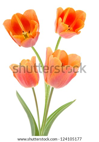 A bouquet of orange tulip flowers - stock photo