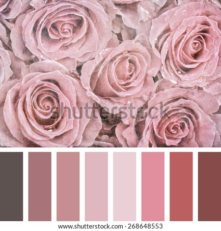 A bouquet of pink roses, textured and filtered to look like an aged photograph, in a colour palette with complimentary colour swatches. - stock photo