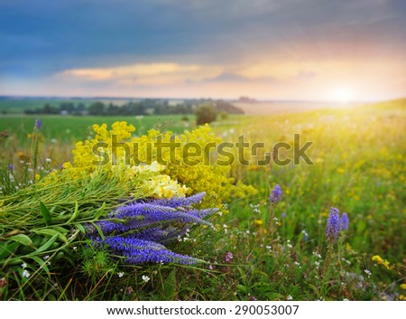 A bouquet of summer flowers on a background landscape at sunset - stock photo