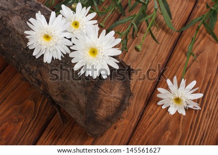 A bouquet of white chrysanthemums on a tree stump on the table - stock photo