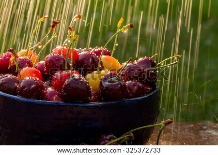 A bowl of fresh cherries in water spray.  - stock photo