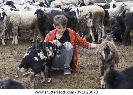 a boy and a goat on a farm - stock photo