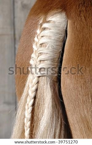 a braid at a horse tail - stock photo