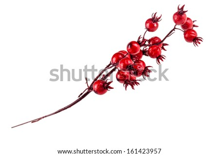 a branch of red christmas berry isolated on a white background - stock photo