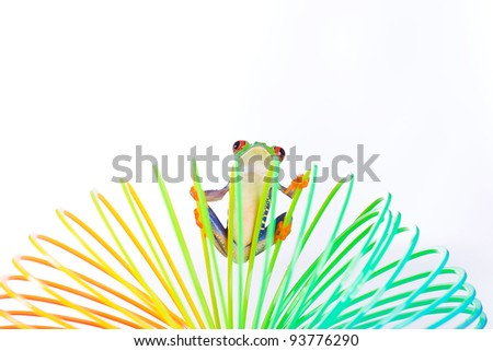 A bright, colorful red eyed tree frog hanging on to a spring, coil toy. - stock photo