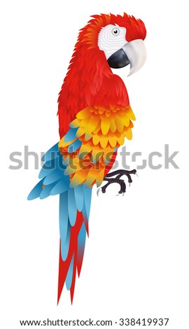 A bright macaw parrot isolated on white background illustration - stock photo