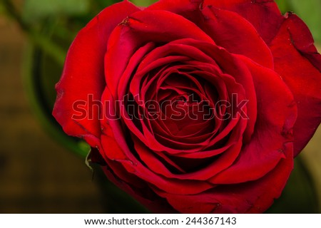 A bright red rose showing petal detail - stock photo