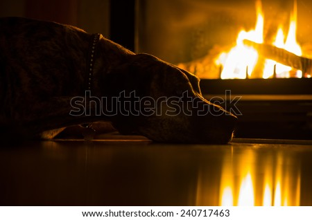 A brindle Great Dane is laying on a floor next to a fire place. The dog is highlighted by the warm light of the flame. - stock photo