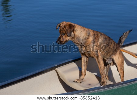 A brindled plott hound on a boat on the water - stock photo