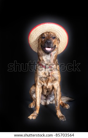 A brindled plott hound wearing a straw hat - stock photo