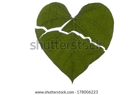 A broken heart shaped leaf on white. - stock photo