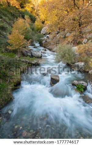 A brook in a forest in Epirus, Greece - stock photo