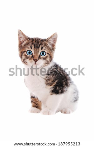 a brown and white tabby kitten with blue eyes on a white background - stock photo