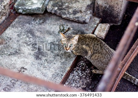 A brown cat lying on a paved floor amongst steel trusses staring at the camera - stock photo