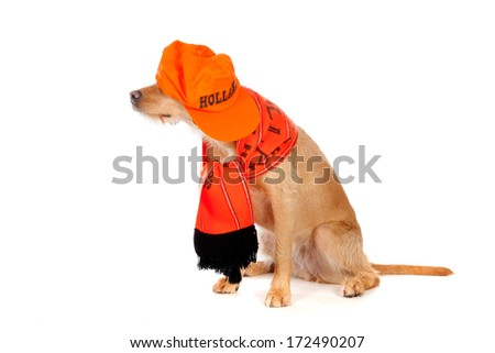 a brown dog, ready to support the dutch soccer-team! - stock photo