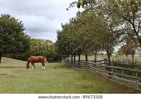A brown horse grazing on grass in a green pasture against an overcast cloudy sky. - stock photo