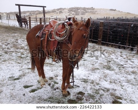A brown horse standing in the cold snow. - stock photo