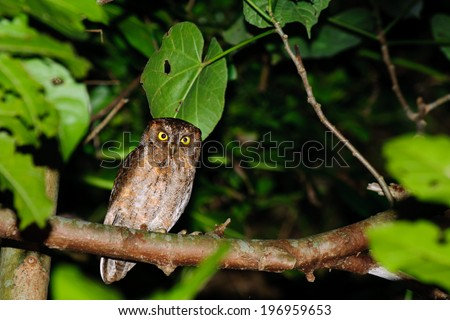 A brown owl sitting on a tree branch. - stock photo